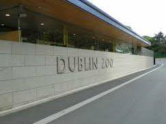 New Arrival At Dublin Zoo