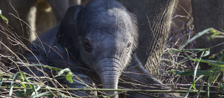 Zoo Celebrates Elephant Birth
