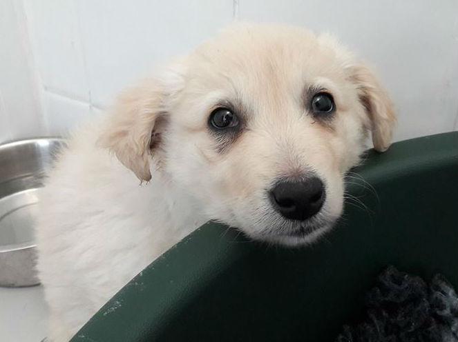 More Pups Seized In Dublin