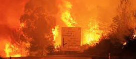 Portugal Forest Fire Kills Dozens