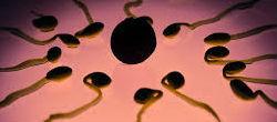 Sperm Drop Prompts Human Extinction Fears