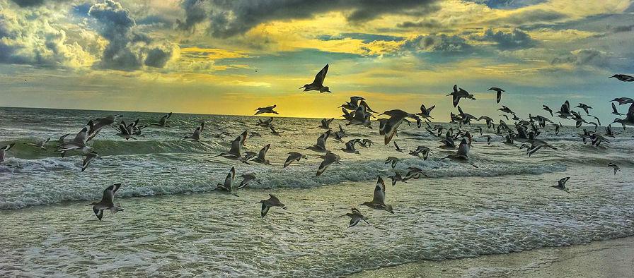 Birds Blamed Over Sandymount Ban