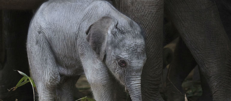 Zoo Announces New Addition
