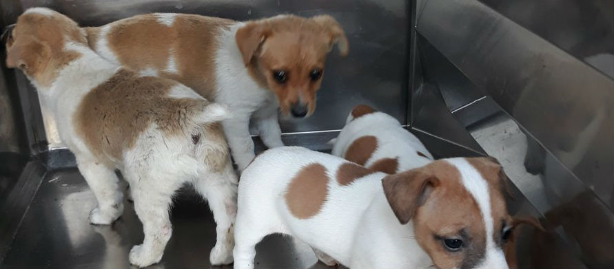 PICTURES: Pups Seized At Port