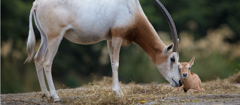 Dublin Zoo Welcomes New Arrival