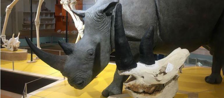 Dublin Zoo Opens New Centre