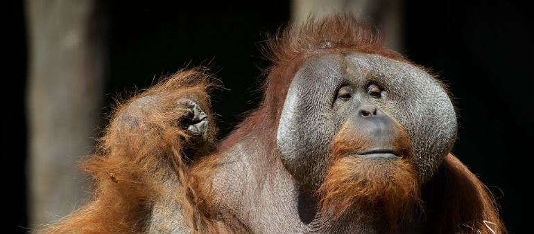 40 year olds go free at Dublin Zoo for Sibu's birthday!