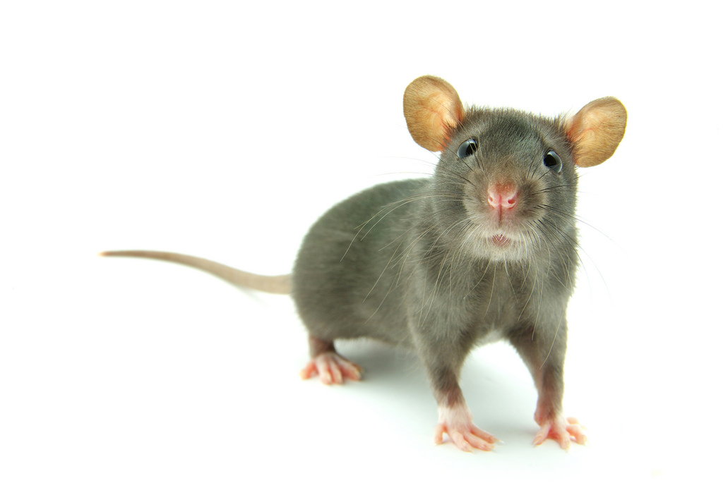 HSE had 4000 pest control call outs in the past year
