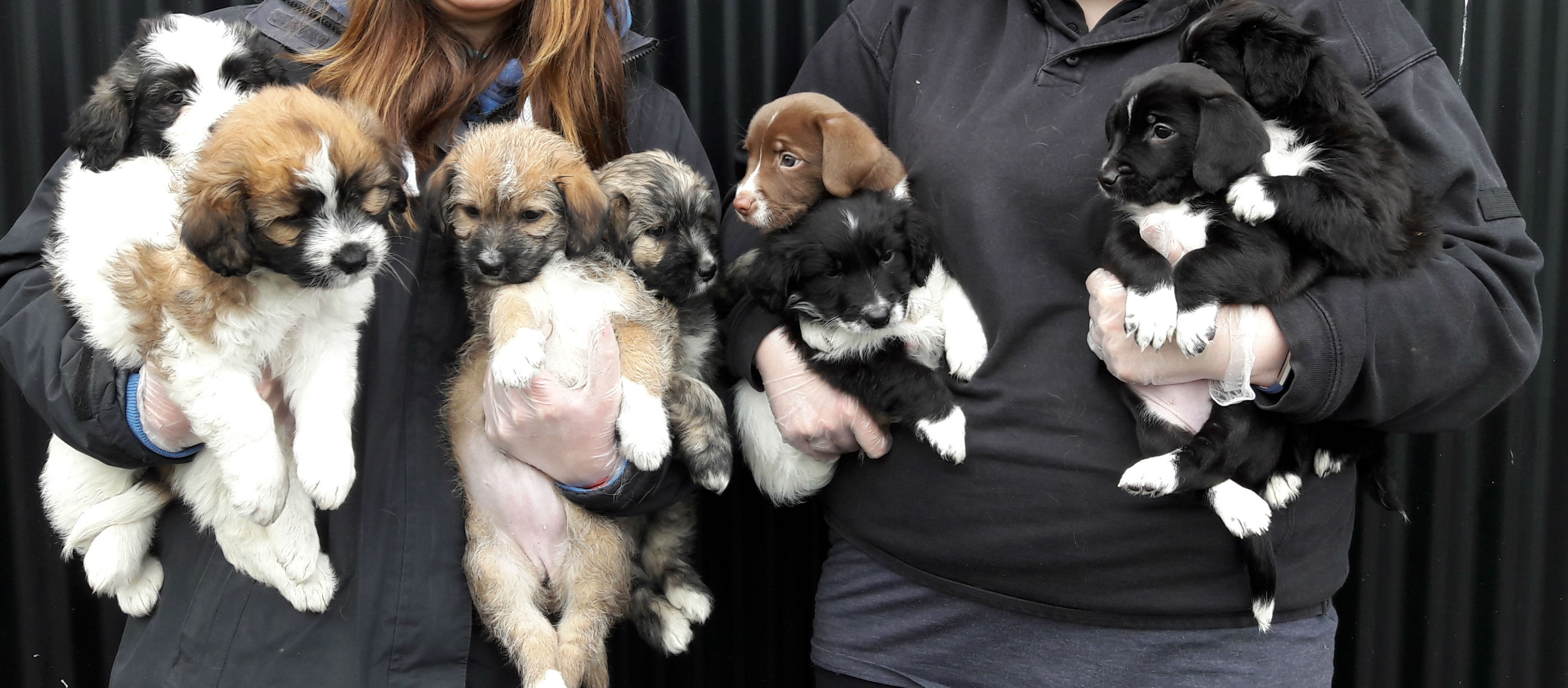 DSPCA Takes In Thirteen Puppies
