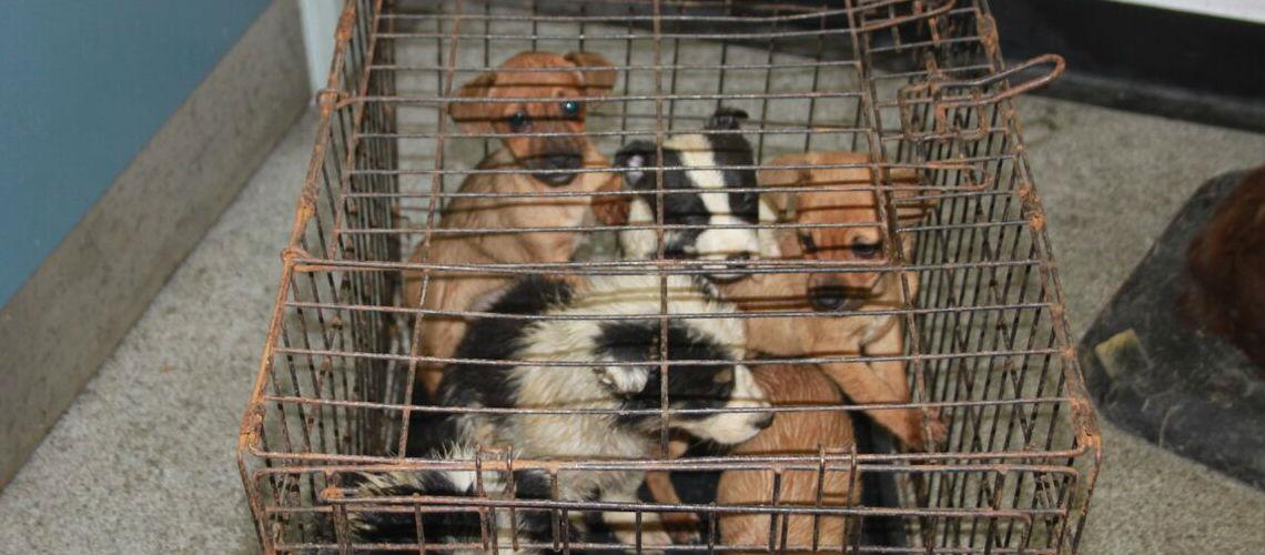 Puppies Seized In Scotland