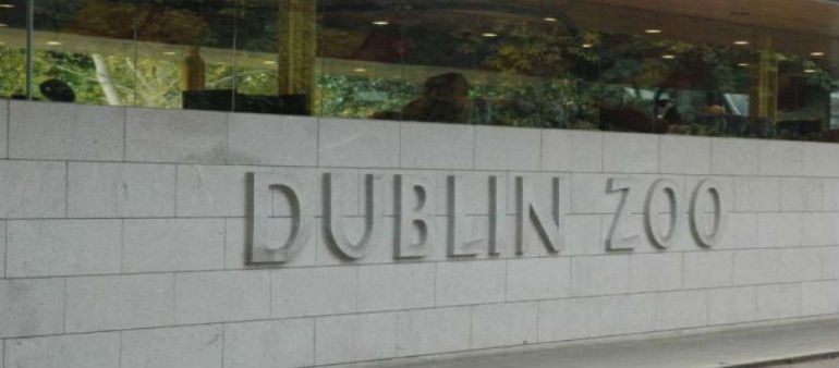 Gorilla Dies At Dublin Zoo