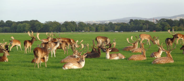 Commuters could be left stranded by Phoenix Park plans