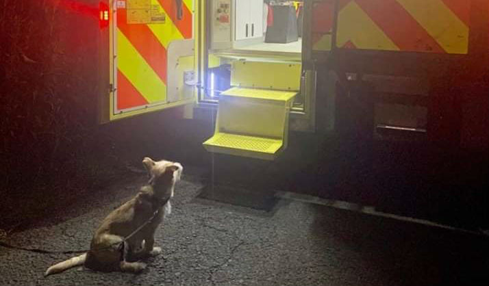 Faithful Dog leads Gardaí to owner