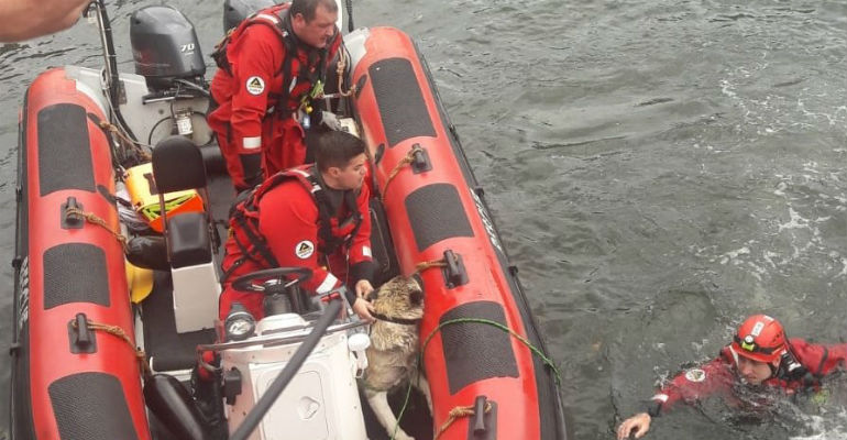 Dog and rescuers saved from the River Liffey