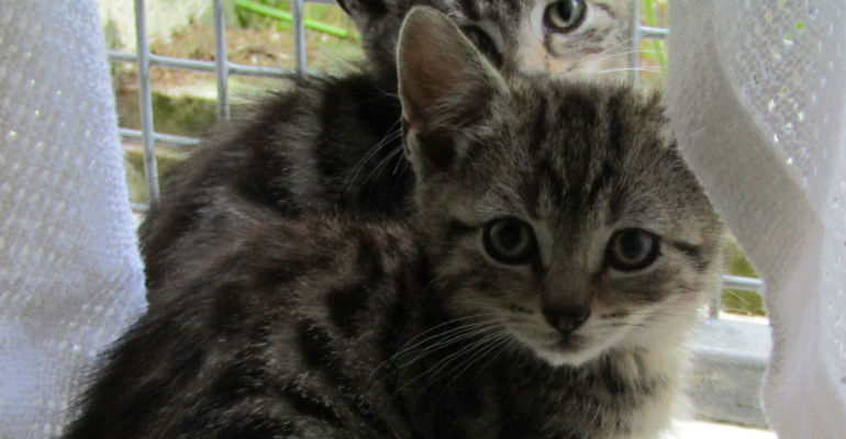 ISPCA appeals for new homes for cats and kittens