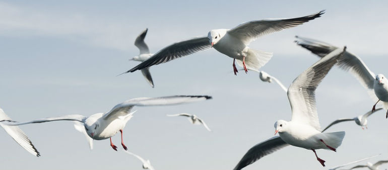 Staring at seagulls can save your chips
