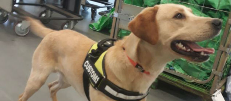 Bailey Detects Cannabis In Slimming Product
